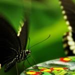 Poeme pentru fluturi
