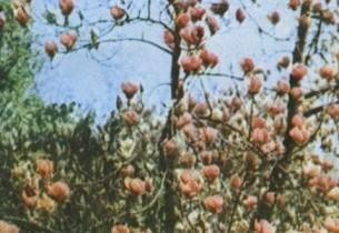 Gânduri despre poezia Anei Blandiana